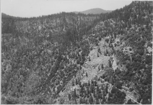 The final portion of the Old Coulterville Road drops steeply into Yosemite Valley. Photo: Yosemite Research Library