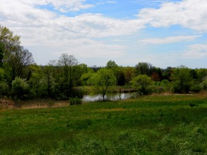 Several organizations help private landowners create legal protections against commercial development on their lands, which aren't just those our houses are on but include commercial, industrial and agricultural lands, too. Pictured: The Gwynedd Wildlife Preserve in Ambler, Pennsylvania. It's fields are being restored and protected after over a century of agricultural use. Photo: amdougherty, courtesy Flickr