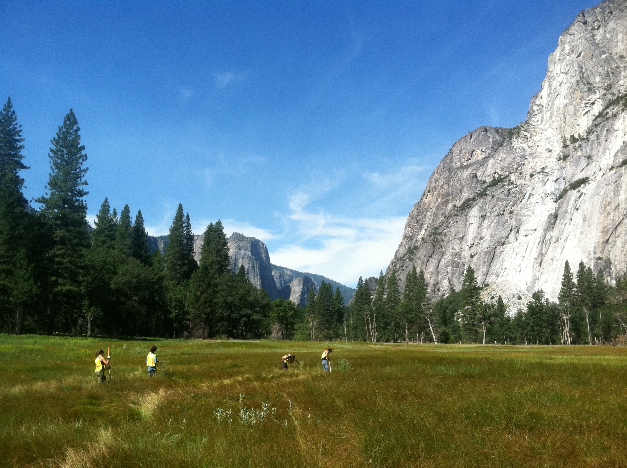 Volunteering in Yosemite.  Photo: M. Dotson