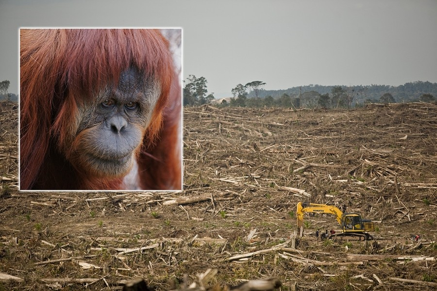 EarthTalk: Palm Oil Production and Rainforest Destruction