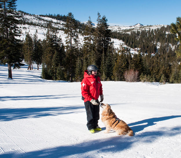Meet Tucker, Tahoe Donner Downhill's friendly Ski Patrol and avalanche dog at the Safety Month Celebration.