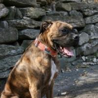 Dog Gear 2011