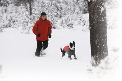 Fido in the Snow