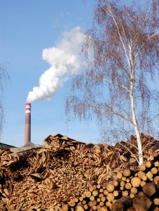 Cutting Down Forests for Biomass Fuel