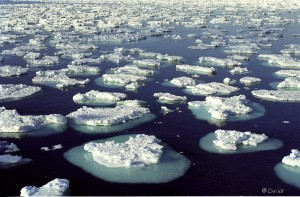 Antarctica's Melting and its Impact on Coastlines