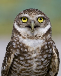 The Burrowing Owl Conservation Network
