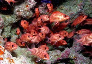 Underwater Wilderness