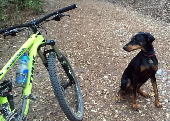 bikevincent2