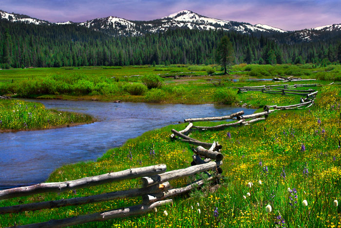 Perazzo Meadows. Photo: Elizabeth Carmel/The Carmel Gallery in Truckee