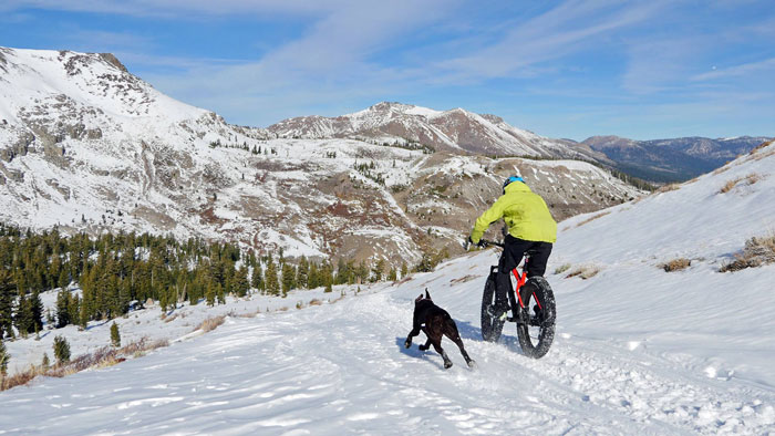 Main image: First Tracks Productions founder Anthony Cupaiuolo and his dog Emmie are both pinned on a Tahoe descent (First Tracks Productions).