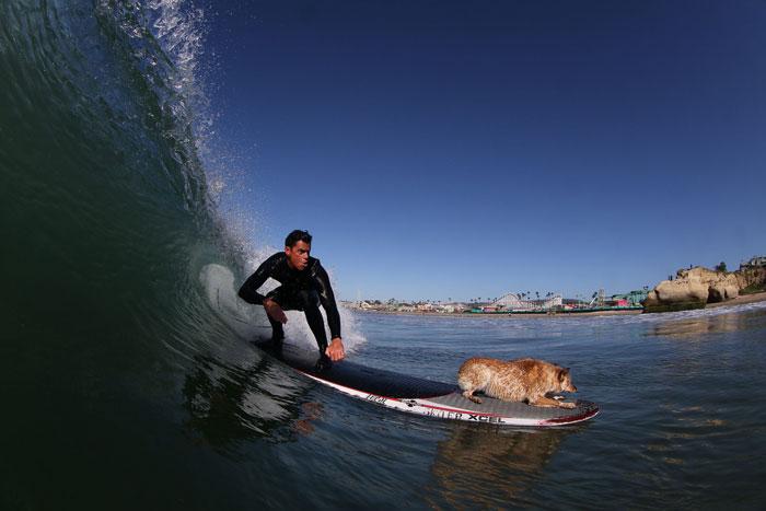 Skyler the Surf Dog