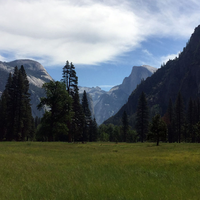 A token meadow shot of Half Dome overseeing the crowded weekend (Meggan Wenbourne).