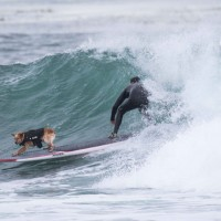 World Dog Surfing Championships 2016