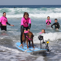 Surf Dog Ricochet: Canine Ambassador for Surfers with Disabilities