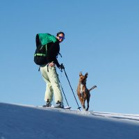 Canine Snow Safety