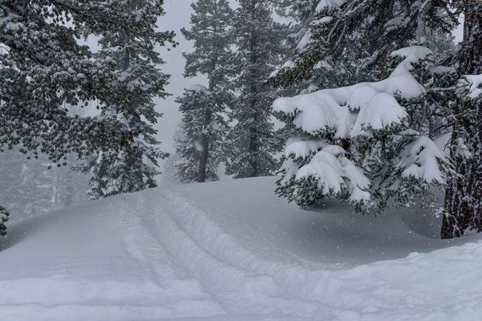 Vail Reports 600 Inches at Tahoe Resorts This Season