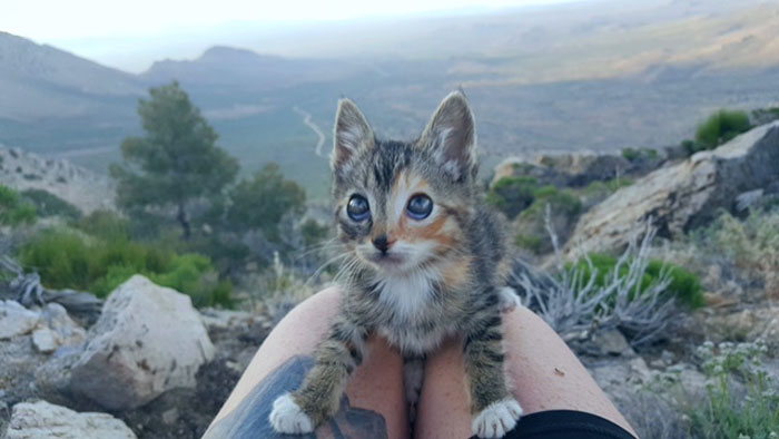 Hiking the PCT with a Kitten
