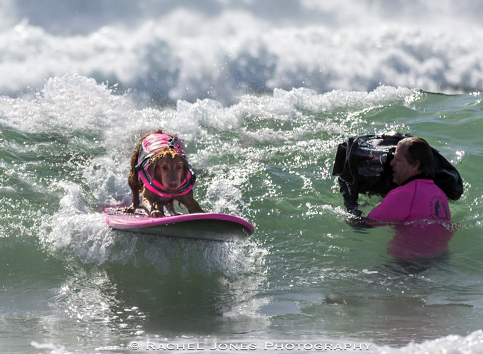"""Surf Dog Ricochet Cast in 3D IMAX Movie """"Superpower Dogs"""""""