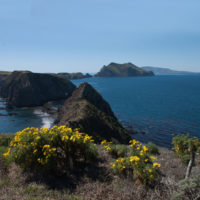 Channel Islands Restoration