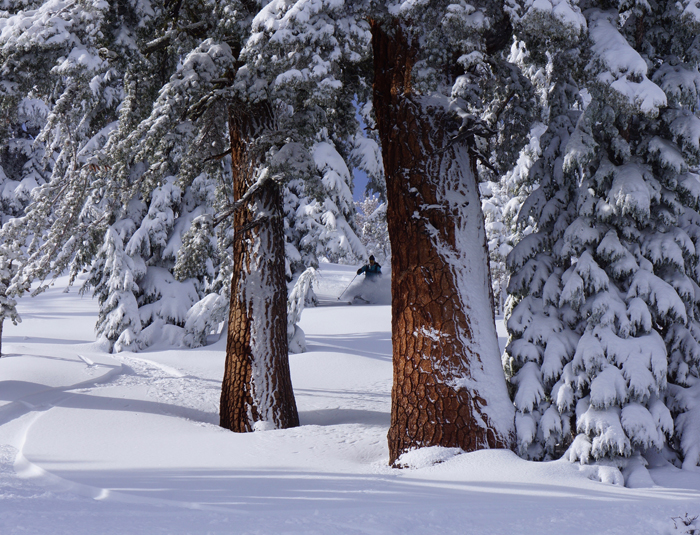 Sarah Halas enjoys the tree skiing in the Mt. Rose backcountry.