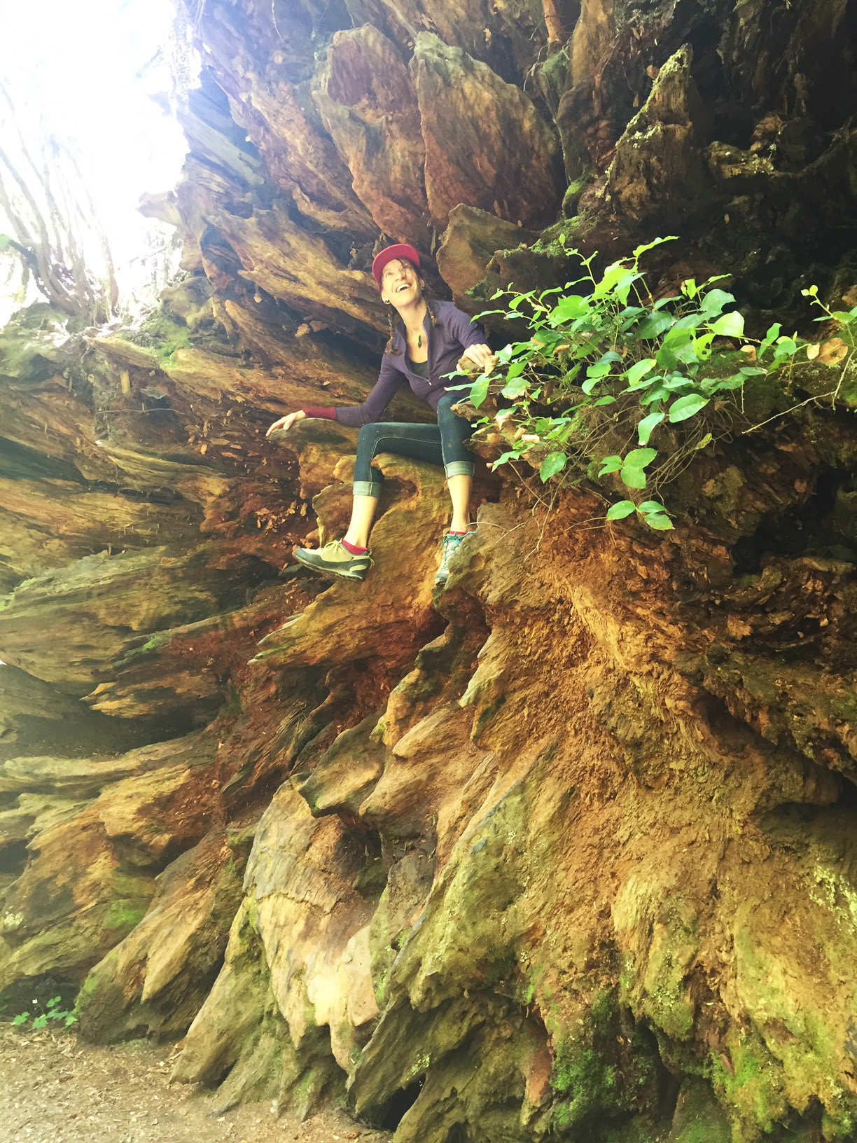 A woman sits on the root ball of a giant tree.