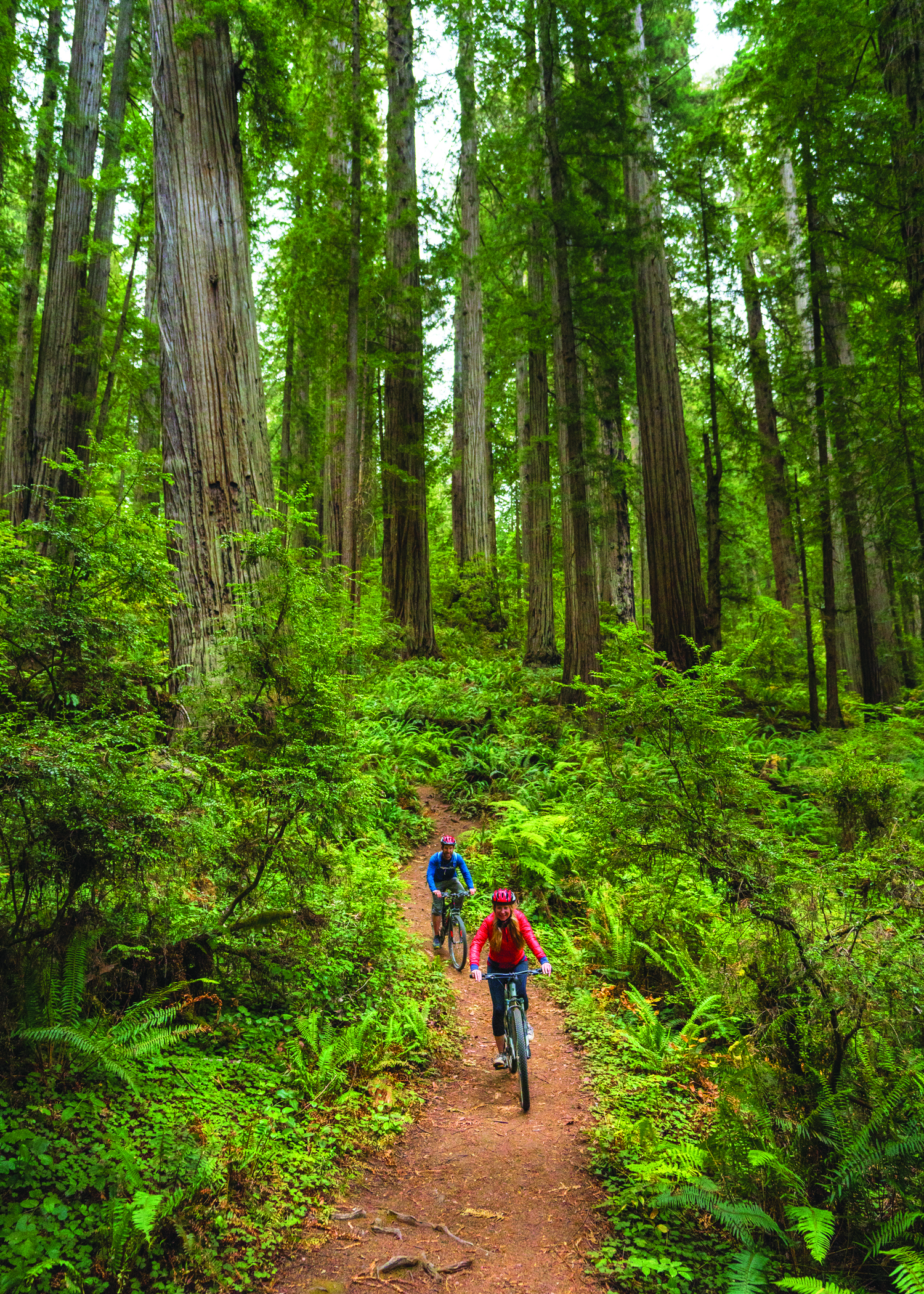 Biking among old-growth redwoods at Jedediah Smith Redwoods State Park.