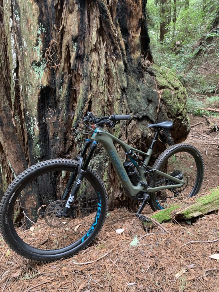 The eMTB Evolution — a great picture of the Turbo LEVO up against the trunk of a large tree
