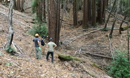 """Mountain Bikers of Santa Cruz Partners with Santa Cruz Bicycles in """"Trees, Trails, and the Return of Sawpit"""" Campaign"""