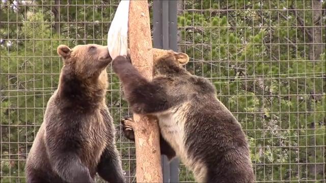 Ursack Bear Resistant Bag Field Test