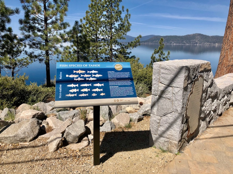 An educational sign along the East Shore Trail in Tahoe. This sign showing information of fish species in Tahoe with the beautiful lake in the background.