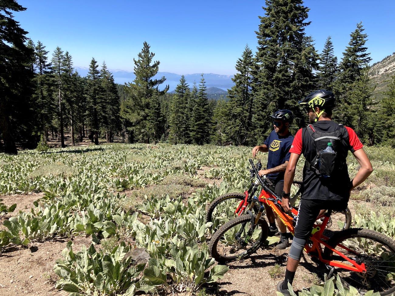 Bikers on Tyrolian Trail