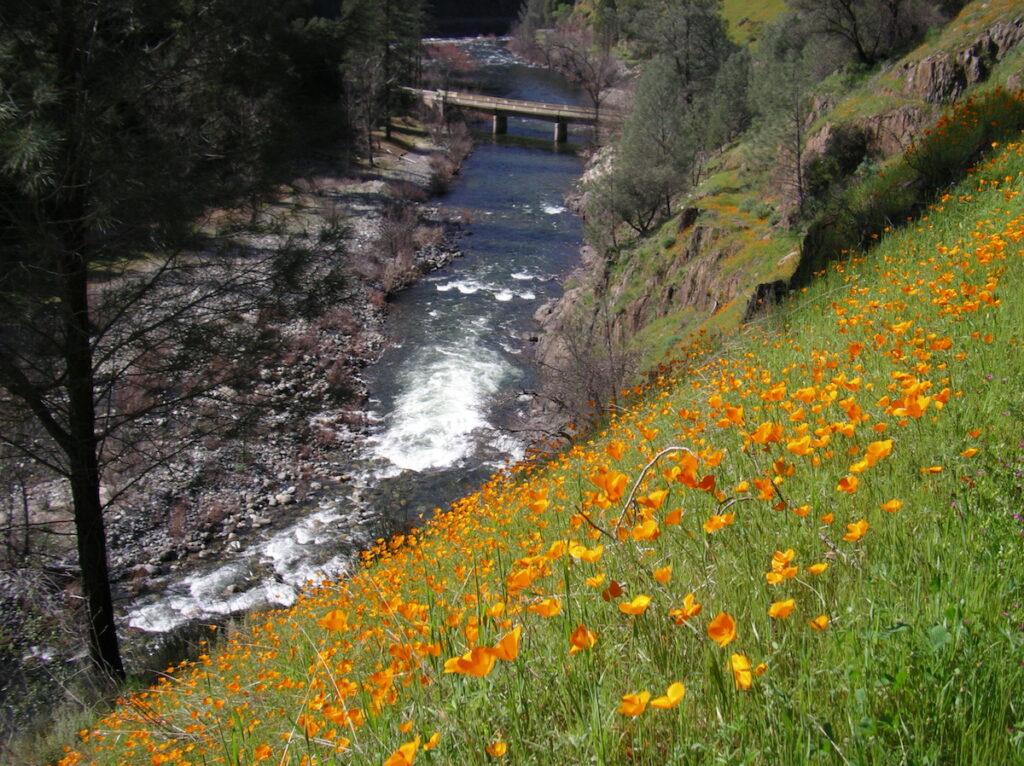 Ron Stork Poppies on hillside