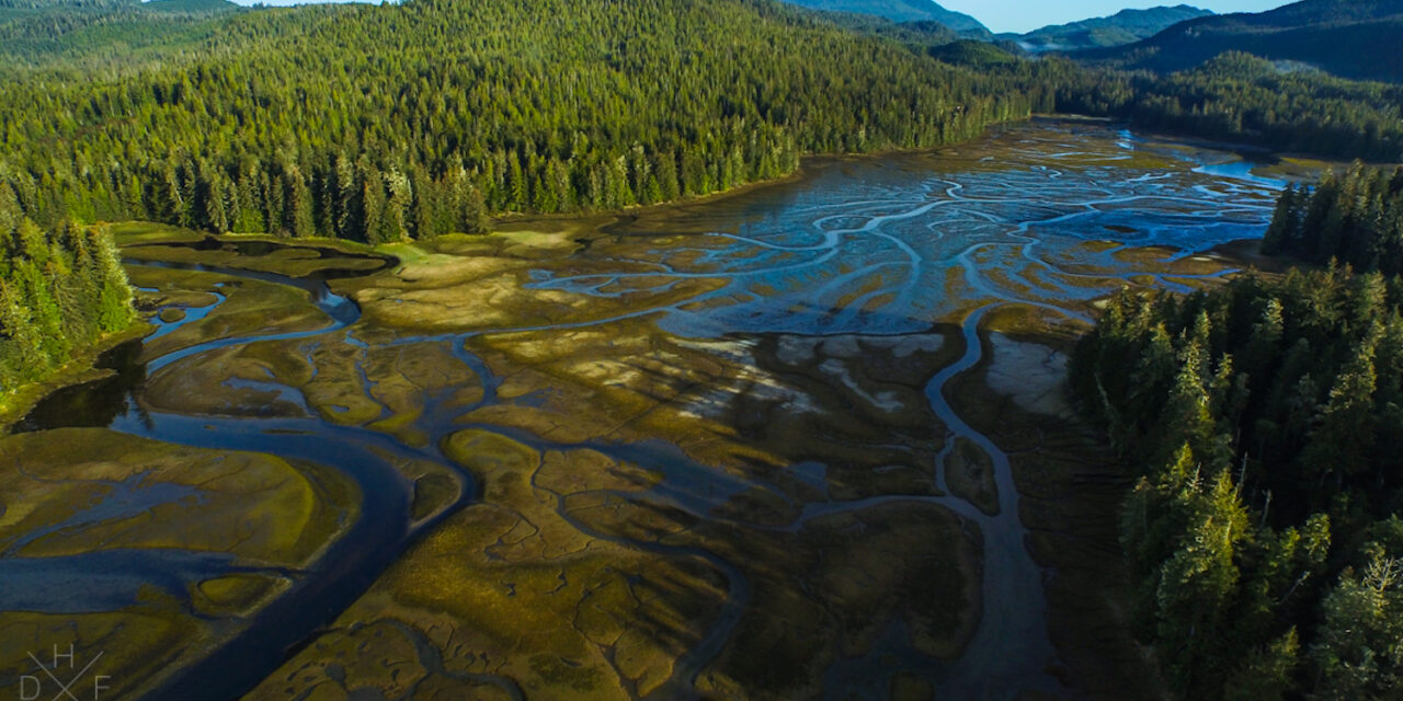 Important First Step Made in Restoring Protections for Tongass National Forest in Alaska
